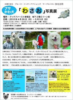 ブサかわ犬「わさお」写真展、ゴールデンウィークに開催!