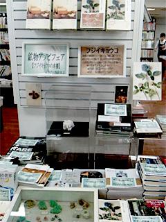 『鉱物アソビ』でお馴染みフジイキョウコの世界を再現した「フジイキョウコの本棚」がリブロ池袋本店にてスタート!