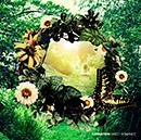 CARNATION「SWEET ROMANCE [Limited Edition]」